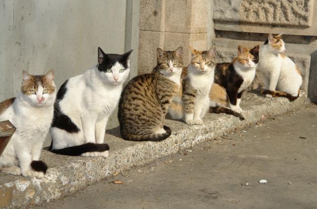 підрахунок котів